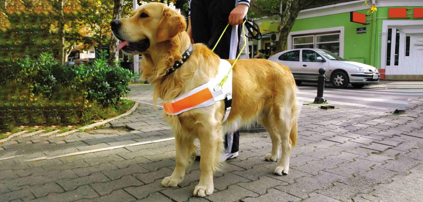 Harnessing a dog's point of view | Vet Voice